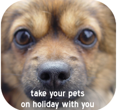 Take your pet on holiday